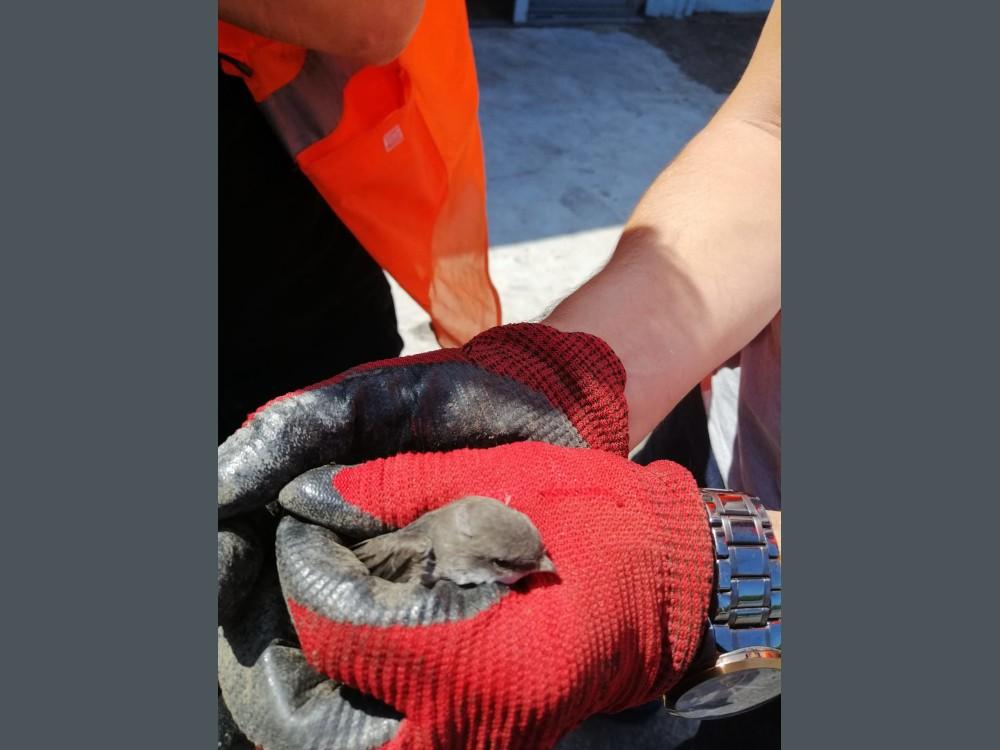 Ölmekten son anda kurtulan yavru kuşlara itfaiye ekiplerimiz sahip çıktı